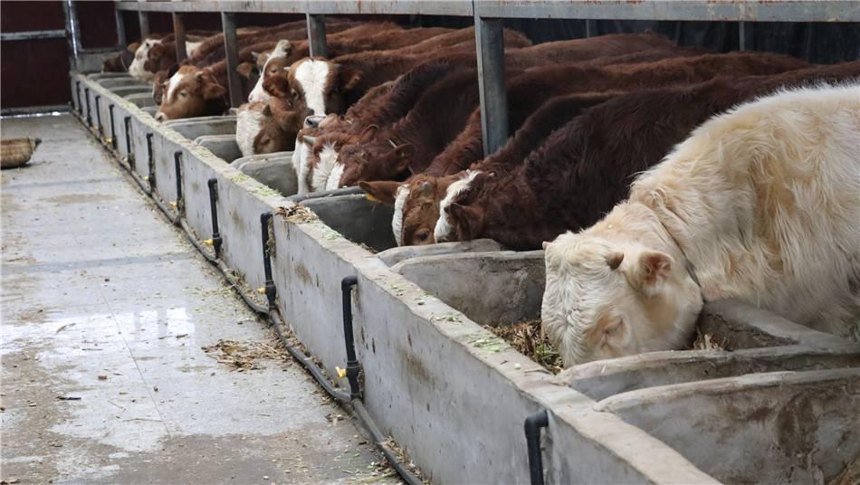 养牛达到多少头才能办养殖证?
