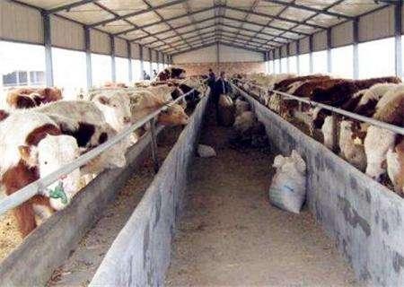谈谈农村养牛补贴政策2019的情况