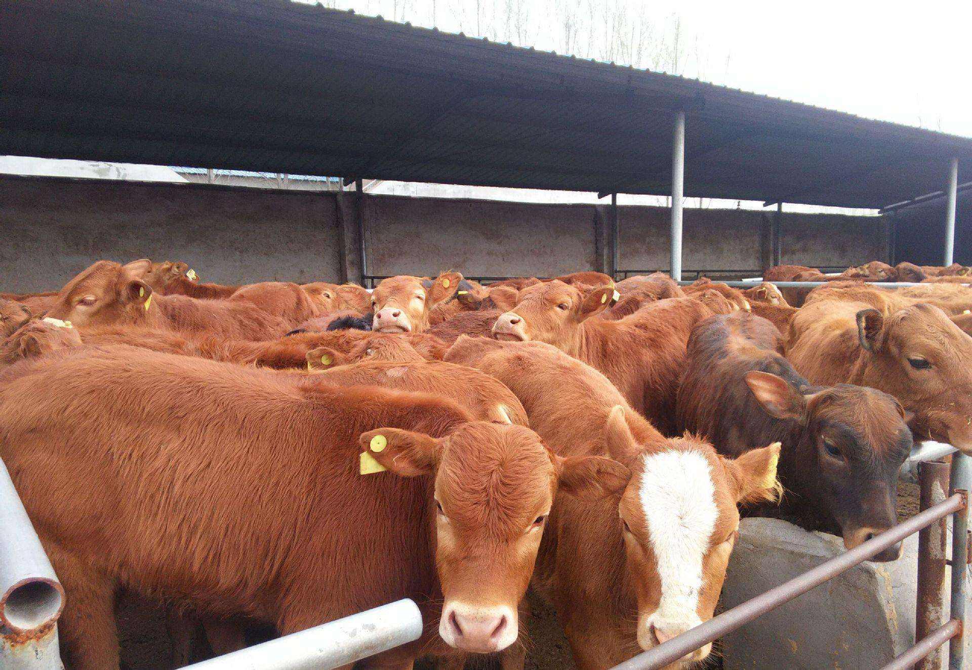 你要知道的养牛国家补贴多少钱