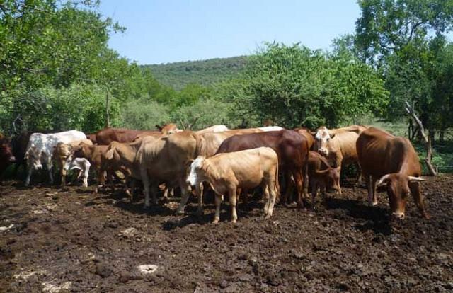 告诉你养牛需要投资多少钱