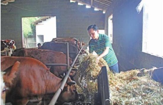 养牛能挣钱吗?分析当下养牛的潮流趋势