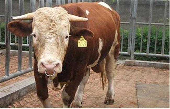 养牛国家有什么政策补贴