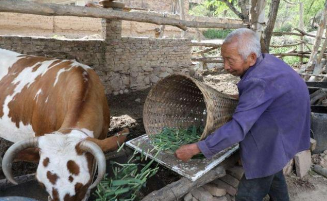 未来十年养牛前景如何?从多个角度分析养牛