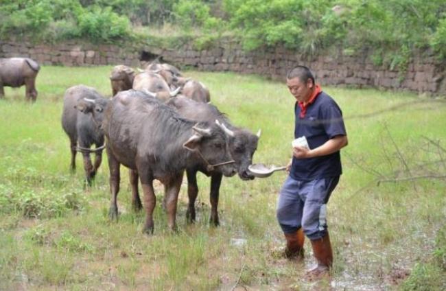 在农村现在养牛赚钱吗?为什么大家不选择养牛?