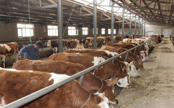 养牛有补助吗?如何获得这些补贴?