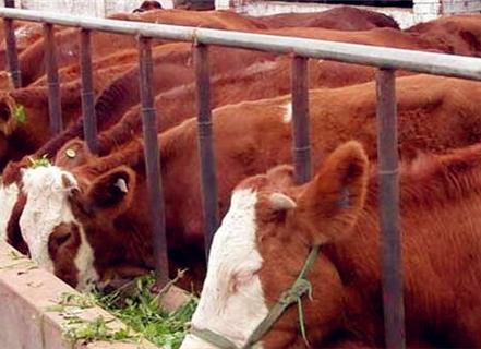 养牛国家补贴多少一头牛?奶牛和肉牛补贴有区别