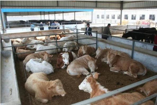 养牛赚不赚钱?养牛需要哪些成本?